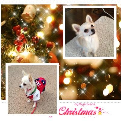 蓮とクリスマス