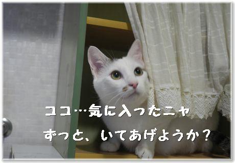 01-ココ気にいった401284