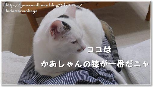 01-ココは膝が好き140131