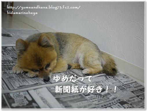 01-ゆめ新聞紙が好き140131