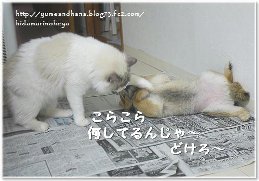 01-ベル何してるんじゃ~140131