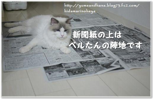 01-ベル新聞紙140131