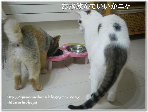 001-ココゆめ1401061