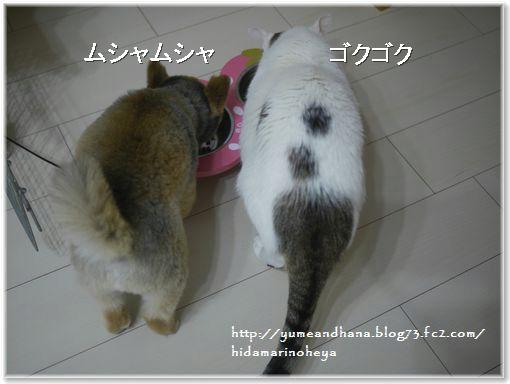 001-ココゆめ1302063