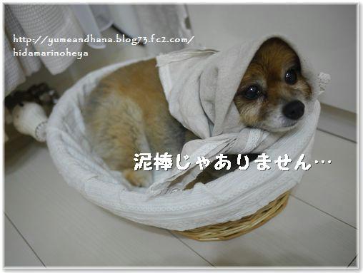 01-ゆめ20140213