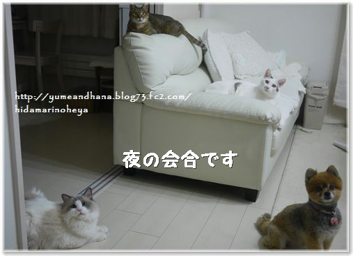 01-夜の会合140213