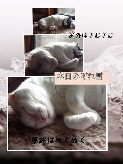 fc2blog_2013011417104824e.jpg