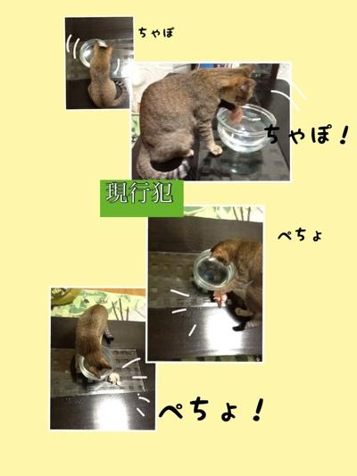 fc2blog_20130114180704fec.jpg