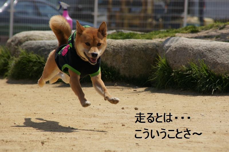 10_20120410214500.jpg