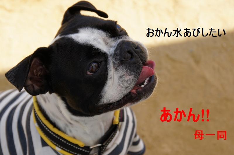 10_20120421192946.jpg