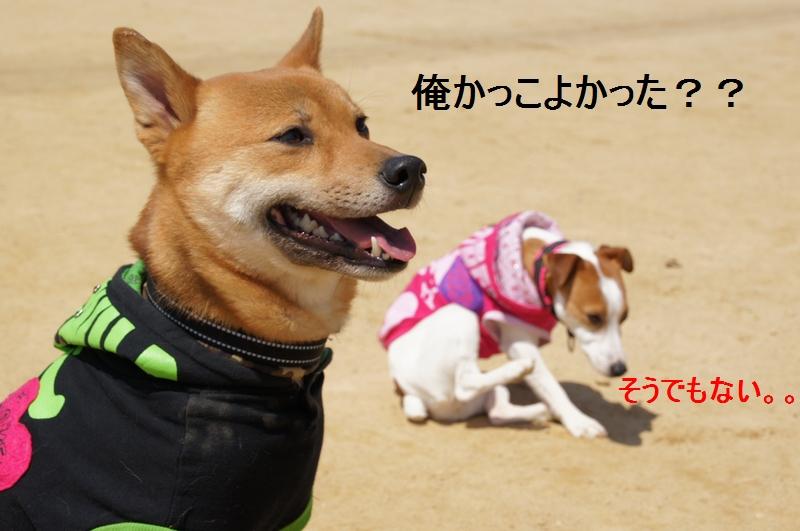 11_20120410214459.jpg