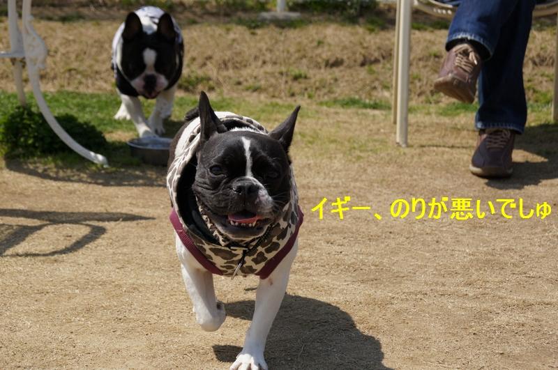 13_20120410215303.jpg
