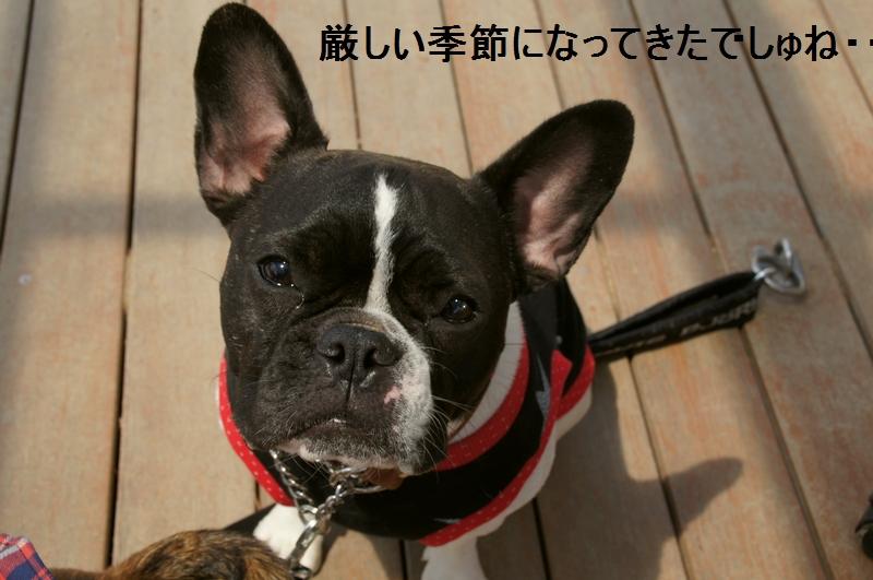 15_20120421193619.jpg