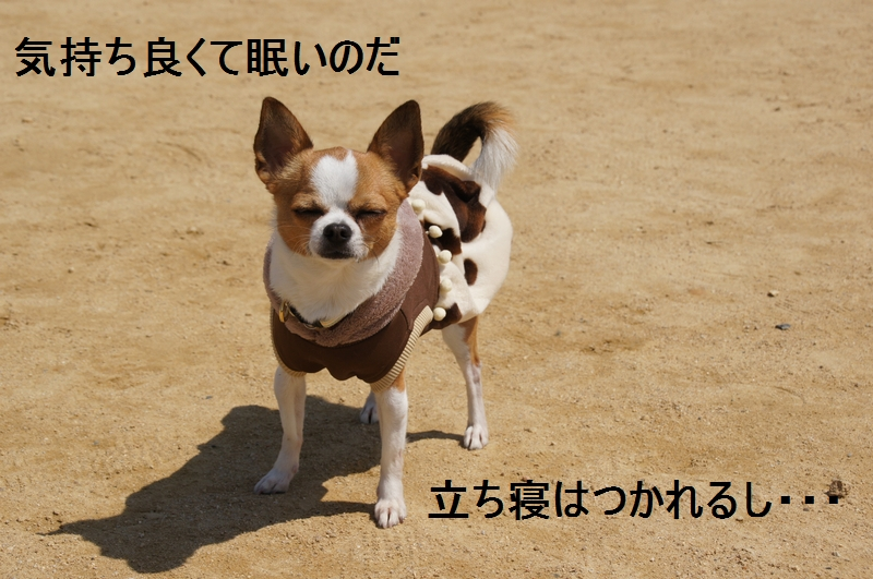 3_20120410213630.jpg
