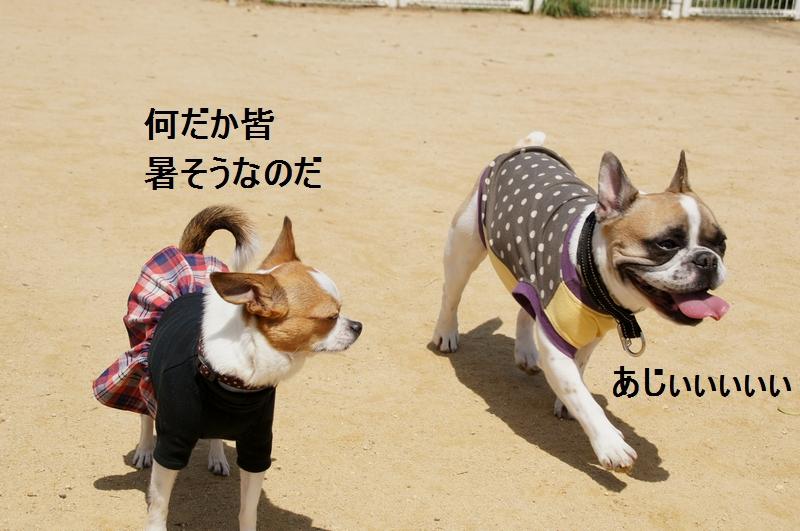 4_20120421192118.jpg