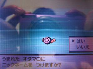 オタマロ(色違い誕生画面)