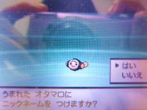 オタマロ2(色違い誕生画面)
