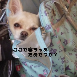 バッグの中で 寝ちゃだめですか?