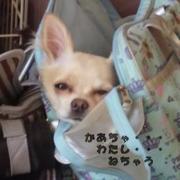 バッグの中 かあちゃんわたし寝ちゃう
