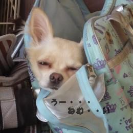 バッグの中 うー・・・眠い