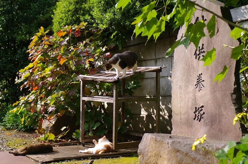 20111210_blog1s.jpg