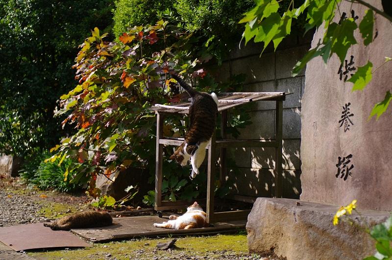 20111210_blog3s.jpg