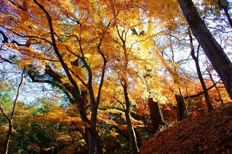 20111211_blog4s.jpg