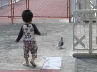 ゆうちゃん鳩