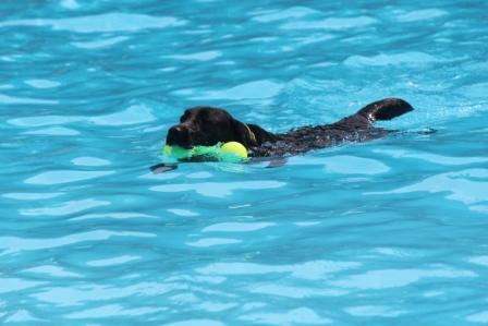 すいすい泳ぐ