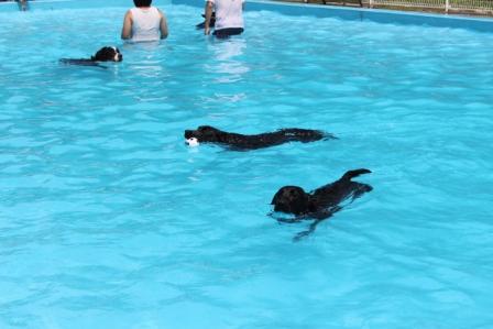2頭で泳ぐ2