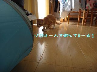 DSC00998_R.jpg