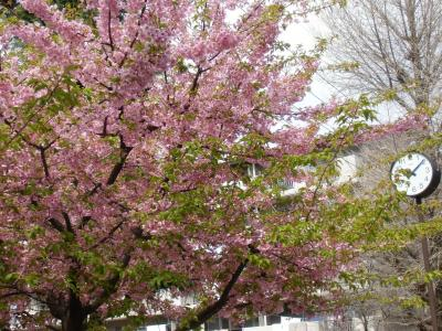 blog_kawadu1_convert_20120413233724.jpg