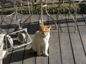 blog_neko2_convert_20120222220813.jpg
