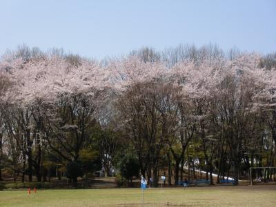blog_sakura_f1_convert_20120413233859.jpg