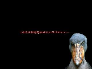 s-20090221_540777.jpg
