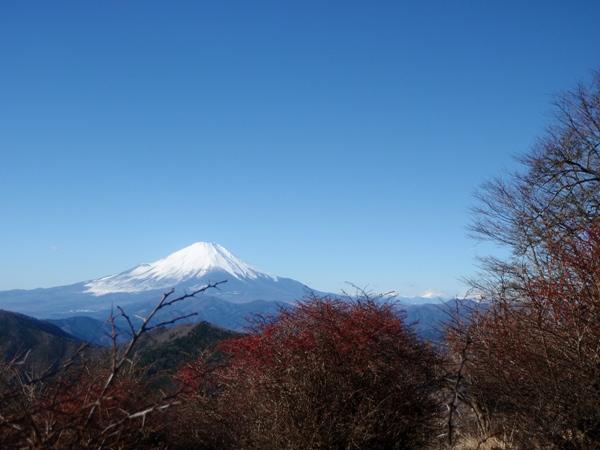 メギと富士