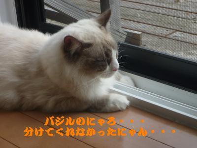 019_convert_20111015141004.jpg