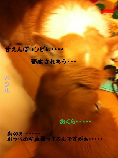 035_convert_20111118004517.jpg