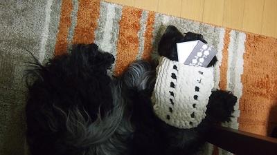 お年玉犬2