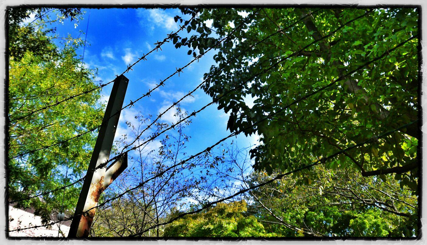 fc2blog_20121210235227d91.jpg
