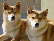 武蔵と小次郎