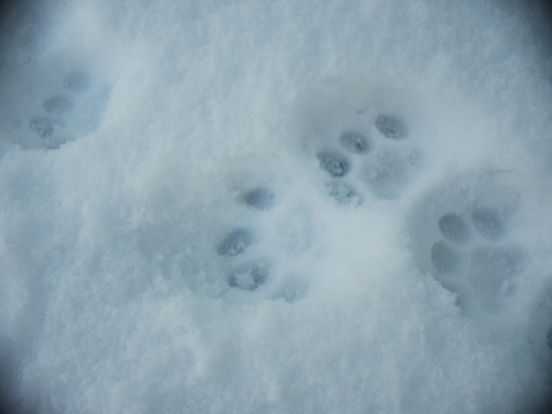 Tracis_Footprint.png