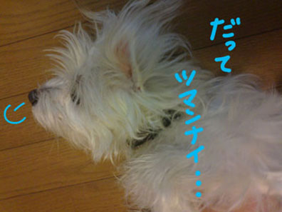 shiro_sigh.jpg
