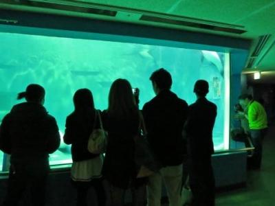 人気の夜の水族館