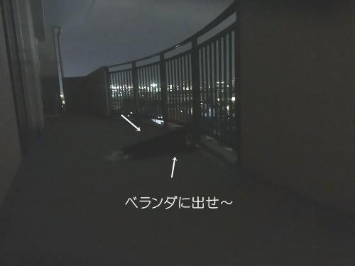 008-1-1.jpg
