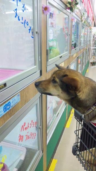 fc2blog_20120510210916141.jpg