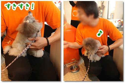 cats_20131129131515a97.jpg