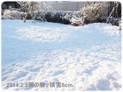雪化粧のお庭1