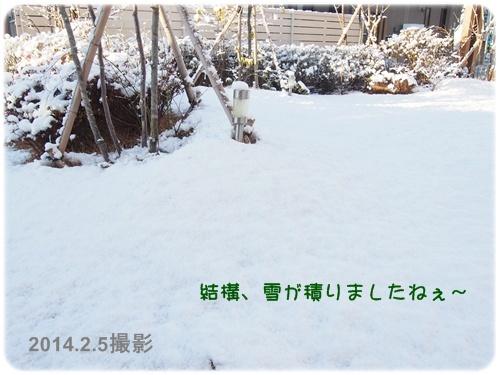 雪化粧のお庭2