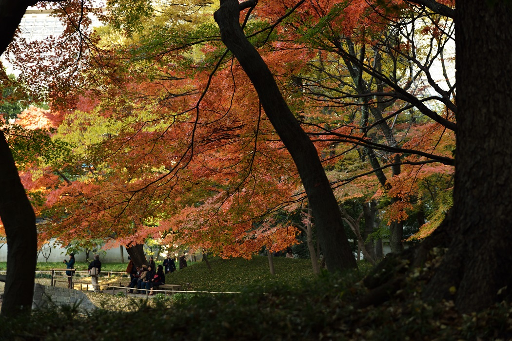 晩秋の小石川後楽園①